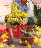 Πωλητής των δέντρων βερικοκιών, Βιετνάμ Στοκ φωτογραφίες με δικαίωμα ελεύθερης χρήσης