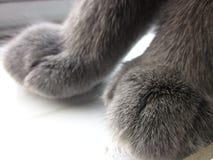 Πόδια γατών Στοκ Εικόνα