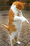 πόδια δύο γατών Στοκ εικόνες με δικαίωμα ελεύθερης χρήσης