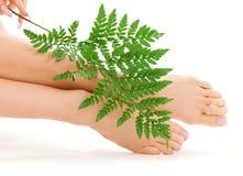 πόδια θηλυκών πράσινων φύλλων Στοκ Εικόνες