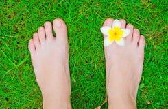 Πόδια με το λουλούδι plumeria στην πράσινη χλόη Στοκ Εικόνα