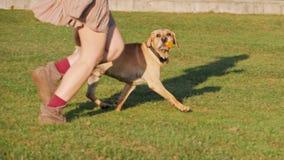 Πόδια μιας γυναίκας που τρέχουν με το χαριτωμένο σκυλί σε μια πράσινη χλόη απόθεμα βίντεο