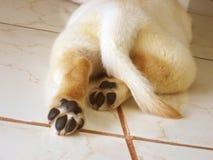πόδια μικροσκοπικά Στοκ Εικόνες