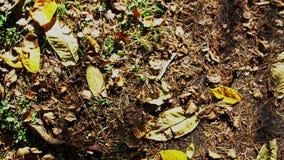 Πόδια στο τζιν παντελόνι και πράσινος περίπατος πάνινων παπουτσιών στο έδαφος φθινοπώρου απόθεμα βίντεο