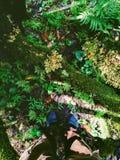 Πόδια της ανθρώπινης στάσης στον τομέα φτερών στοκ φωτογραφίες