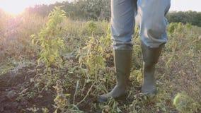 Πόδια της Farmer στα wellingtons που πηγαίνουν στον αγροτικό τομέα, κινηματογράφηση σε πρώτο πλάνο φιλμ μικρού μήκους