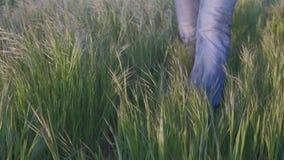 Πόδια του αρσενικού αγρότη που περπατούν στην ψηλή χλόη σε σε αργή κίνηση απόθεμα βίντεο