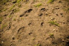Πόδια τυπωμένων υλών σε μια υγρή άμμο στοκ φωτογραφίες με δικαίωμα ελεύθερης χρήσης