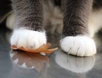 πόδια φύλλων Στοκ Φωτογραφίες