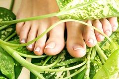 πόδια pedicure Στοκ Εικόνα