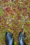 πόδια wellingtons Στοκ φωτογραφίες με δικαίωμα ελεύθερης χρήσης