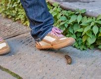 Πόδι ενός πεζού που είναι περίπου στο βήμα σε ένα επίστεγο σκυλιών Στοκ εικόνα με δικαίωμα ελεύθερης χρήσης