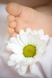 πόδι μαργαριτών μωρών Στοκ Εικόνες