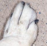 Πόδι σκυλιών Κινηματογράφηση σε πρώτο πλάνο Στοκ φωτογραφίες με δικαίωμα ελεύθερης χρήσης