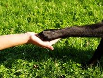 Πόδι στη διάθεση (9) Στοκ φωτογραφία με δικαίωμα ελεύθερης χρήσης