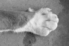 Πόδι του ποδιού γατών Στοκ φωτογραφία με δικαίωμα ελεύθερης χρήσης