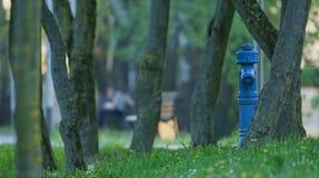 πόλεων ευτυχής γυναίκα άνοιξη πάρκων έγκυος Στοκ Εικόνα