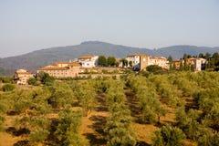 πόλης δέντρα tuscan ελιών Στοκ φωτογραφία με δικαίωμα ελεύθερης χρήσης