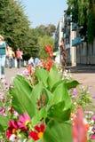 πόλη λουλουδιών Στοκ Εικόνες