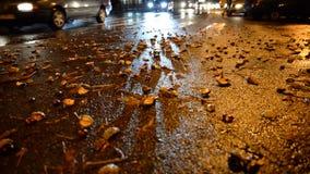 Πόλη νύχτας raod με τα κίτρινα φύλλα atutmn στο δρόμο απόθεμα βίντεο