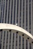 πόλη πουλιών στοκ εικόνες