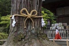 Πόλη Fujiyoshida, Ιαπωνία - 13 Ιουνίου 2017: Το ιερό δέντρο σε Fuj Στοκ Εικόνες