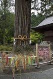 Πόλη Fujiyoshida, Ιαπωνία - 13 Ιουνίου 2017: Το ιερό δέντρο, goshi Στοκ Φωτογραφίες