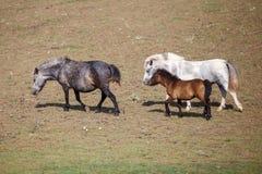 Πόνι με foal στο λιβάδι στον τομέα στοκ φωτογραφία με δικαίωμα ελεύθερης χρήσης