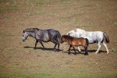 Πόνι με foal στο λιβάδι στον τομέα στοκ εικόνα με δικαίωμα ελεύθερης χρήσης