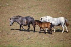 Πόνι με foal στο λιβάδι στοκ φωτογραφία με δικαίωμα ελεύθερης χρήσης