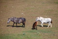 Πόνι με foal στο λιβάδι στοκ φωτογραφίες με δικαίωμα ελεύθερης χρήσης