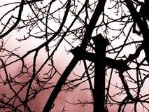 πόνος Στοκ φωτογραφία με δικαίωμα ελεύθερης χρήσης