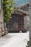 Πόρτα από την Προβηγκία Γαλλία με την πέτρα και την ξύλινη σύσταση και σκυλί Στοκ φωτογραφία με δικαίωμα ελεύθερης χρήσης