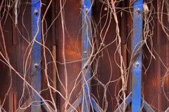 Πόρτα μετάλλων στη σκουριά και τις εγκαταστάσεις Στοκ Φωτογραφία