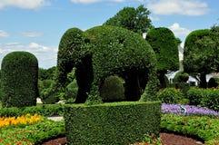 Πόρτσμουθ, RI: Ελέφαντας Topiary στα πράσινα ζώα Στοκ Εικόνες