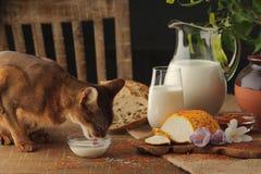Πόσιμο γάλα γατών στον ξύλινο πίνακα δίπλα στο τυρί αιγών με το condi Στοκ φωτογραφία με δικαίωμα ελεύθερης χρήσης