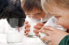 πόσιμο γάλα παιδιών γατών Στοκ φωτογραφία με δικαίωμα ελεύθερης χρήσης