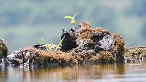Πόσιμο νερό εντόμων μελισσών σε μια λίμνη κήπων απόθεμα βίντεο