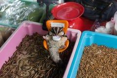 Πόσιμο νερό ζάχαρη-ανεμοπλάνων στο κατάστημα κατοικίδιων ζώων Στοκ Εικόνες
