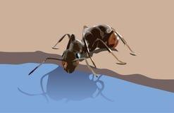 Πόσιμο νερό μυρμηγκιών Στοκ Φωτογραφία