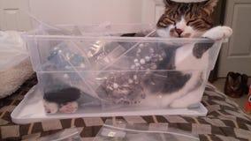 Πόσο είναι το γατάκι στο κόσμημα; Στοκ φωτογραφίες με δικαίωμα ελεύθερης χρήσης