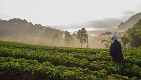Πότισμα αγροτών γυναικών στο αγρόκτημα φραουλών Στοκ Φωτογραφίες