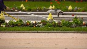 Πότισμα ενός χορτοτάπητα λουλουδιών στο πάρκο στοκ φωτογραφίες