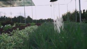 πότισμα κήπων απόθεμα βίντεο