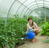 πότισμα κηπουρών Στοκ εικόνες με δικαίωμα ελεύθερης χρήσης