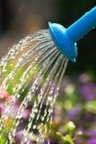 πότισμα λουλουδιών Στοκ εικόνες με δικαίωμα ελεύθερης χρήσης