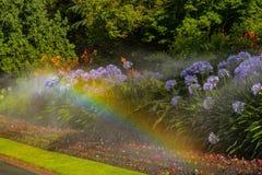 πότισμα λουλουδιών Στοκ φωτογραφία με δικαίωμα ελεύθερης χρήσης