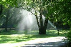 πότισμα πάρκων Στοκ Φωτογραφία