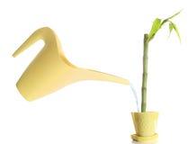 πότισμα πράσινων φυτών Στοκ εικόνα με δικαίωμα ελεύθερης χρήσης
