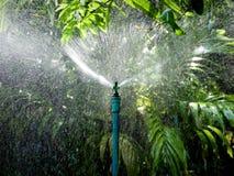 Πότισμα στον κήπο Στοκ εικόνα με δικαίωμα ελεύθερης χρήσης
